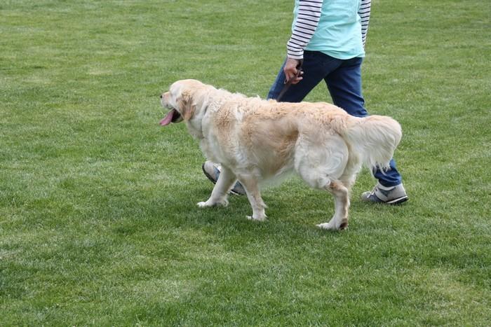 chien-2046