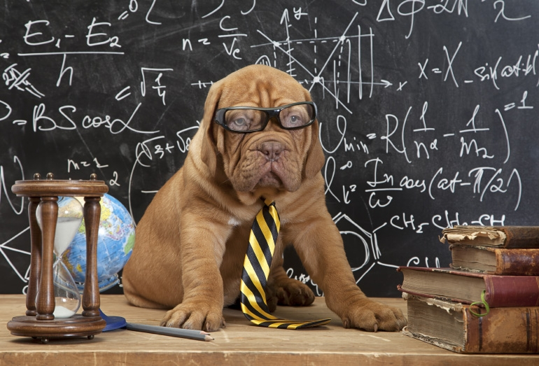 rentree-classe-scolaire-chien-shopping-canin